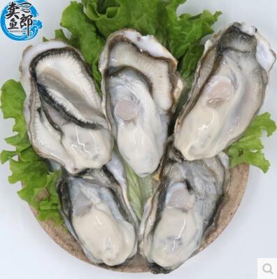 青岛野生新鲜海蛎子 鲜活生蚝带壳牡蛎冰鲜海蛎子5斤装顺丰包邮